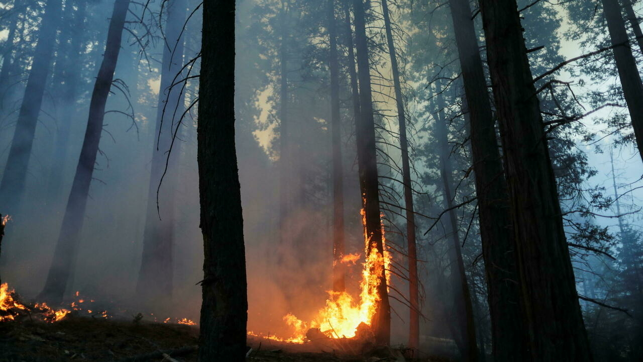 US fire crews wrap giant trees in blankets to save them from blaze