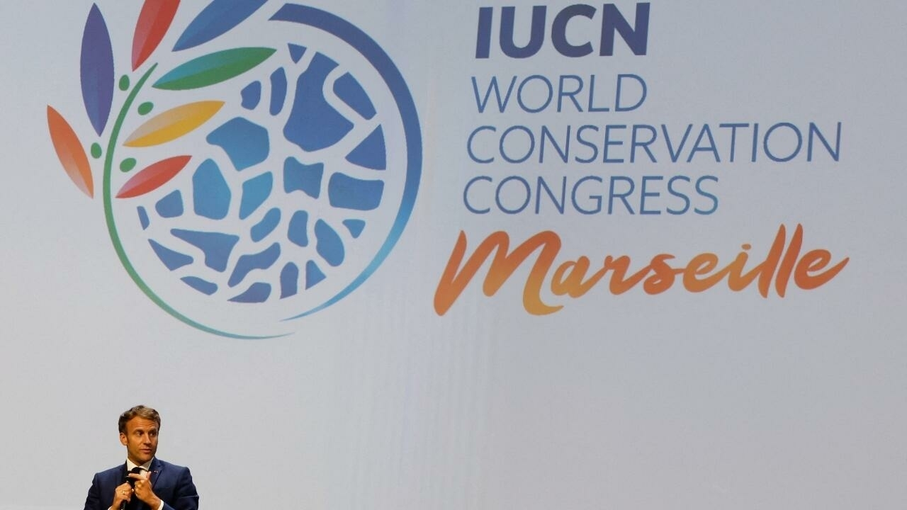 Global environment conference in Marseille to focus on wildlife protection